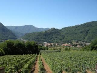 Apartment with swimming pool in vineyhard and olive grove beautiful view - Borgo a Mozzano vacation rentals