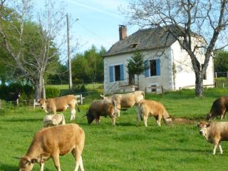3 bedroom Gite with Internet Access in Argentat sur Dordogne - Argentat sur Dordogne vacation rentals