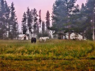 Bedroll and Breakfast ™ - Teton Village vacation rentals
