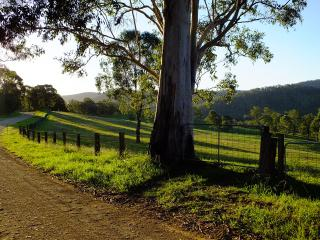 Cottages On Mount View Hunter Valley - Mount View vacation rentals