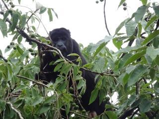 La Primavera Wildlife Observation Station - San Ignacio vacation rentals