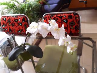 Modern 2 bdr Executive Apartmenent - San Jose vacation rentals