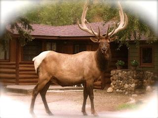 Redemption on a River ...  in a Storybook Setting - Estes Park vacation rentals