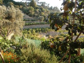 ikarianwine- rural accommodation of real character - Evdilos vacation rentals