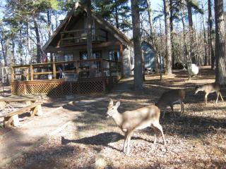 Mt Nebo State Park A-Frame Cabin on Top - Dardanelle vacation rentals