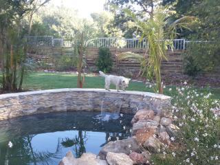 Riverside Cottages - Constantia vacation rentals