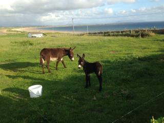 Oyster Bay House - Belmullet vacation rentals
