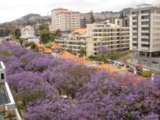 Accommodation Apartment Funchal center - Funchal vacation rentals