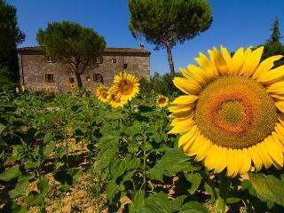 crete Senesi holiday apartment albicocco - Asciano vacation rentals
