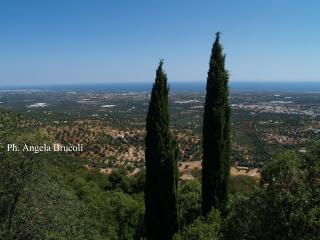 Magica Casa Guest House  - ULIVO SECOLARE - 4 pax - Montalbano di Fasano vacation rentals