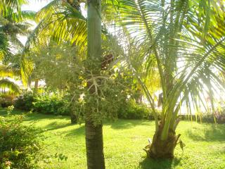 soleil levant - Trou d'eau Douce vacation rentals