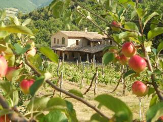 Bio Fattoria Località il Piano Apartment  I Meli - Vallo di Nera vacation rentals