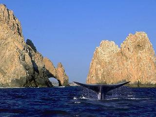 Wow! 2 Bdrm 'Executive' Jacuzzi W/Best Views - Cabo San Lucas vacation rentals