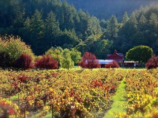 Wine Country 5 min to Healdsburg -Central Location - Russian River vacation rentals
