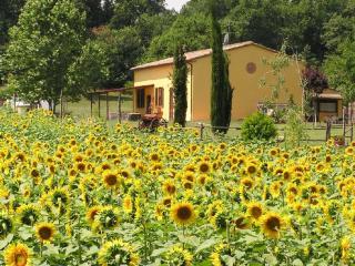 Casolare di campagna in tipico stile toscano - Bibbona vacation rentals