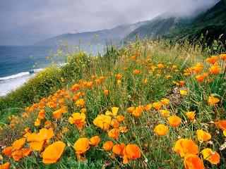 3690 Panoramic Point - Tranquil Big Sur Paradise! Ocean Views For Miles! - Carmel Valley vacation rentals