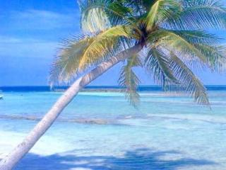 Madi Guest House Thulusdhoo Maldive - Thulusdhoo Island vacation rentals
