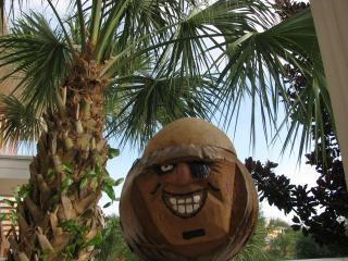 Your Tropical Oasis Awaits! - Davenport vacation rentals