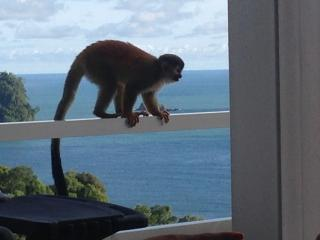 Stunning Villa, Ocean Views, Private Pool, Monkey Visitors Daily - Quepos vacation rentals