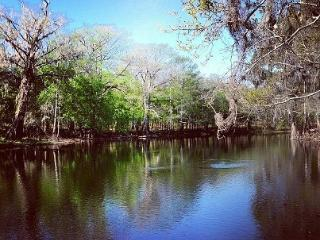 Turtle Palace on the Santa Fe River - Fort White vacation rentals