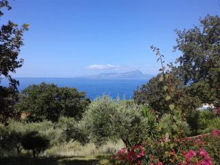Villa panoramica immersa nel verde - Marina di Maratea vacation rentals