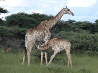 GABUS GAME RANCH - Namibia vacation rentals