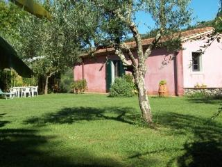 Olivo - Country home under the olive trees w pool - Nocchi vacation rentals