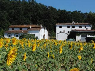 "Vacation home in Tuscany "" La Paduletta"" - Calcinaia vacation rentals"