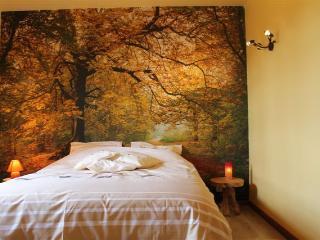 Au fil des saisons sur la Wiels: Foret en Automne - Fauvillers vacation rentals