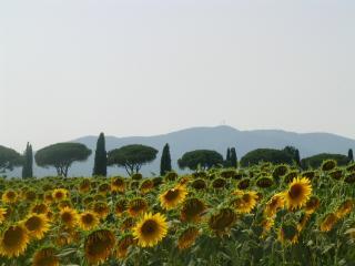 Country-side apt with garden 5min from the beach - Castiglione Della Pescaia vacation rentals