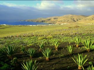 Casa Playa Quemada - Playa Quemada vacation rentals
