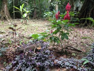 Oceanfront Villa Noor - 5 acres of Wildlife/Beach - Manzanillo vacation rentals
