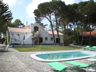 IN A PINEWOOD NEAR THE BEACH - Colares vacation rentals
