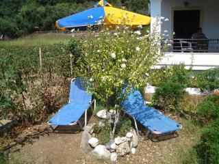 Seaside Studio 50m from  beach  2 - 3,persons - Agios Gordios vacation rentals