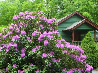 Romantic House with A/C and Wireless Internet - Boone vacation rentals