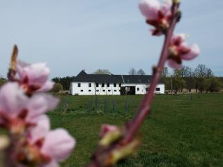 Peškův mlýn - Borovany vacation rentals