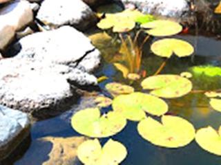 Pond Casita on a 40 acre organic goji berry farm - San Cristobal vacation rentals