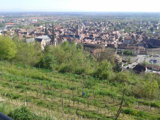 Loft : Solarium du Clos Sainte Odile - Obernai vacation rentals