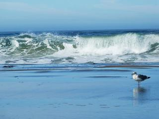 "Sea Breeze"" 5 minute walk to Beach,Remodeled!  A Village Favorite! - Dillon Beach vacation rentals"
