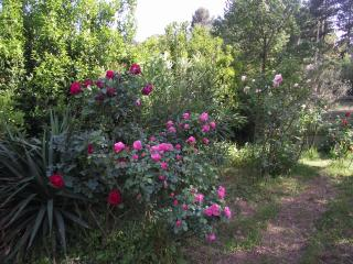 Spacious apartment in secluded countryside - Lodeve vacation rentals