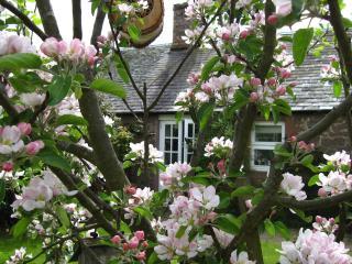 Romantic 1 bedroom Cottage in Alyth - Alyth vacation rentals