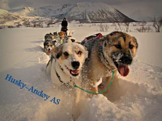 Huskyfarm Husky-Andøy - Lofoten Islands vacation rentals
