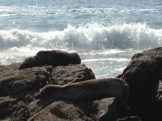 Emerald Bay Point Beach Home - Laguna Beach vacation rentals