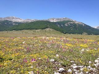 Estate ed inverno nella natura vera - Rocca di Mezzo vacation rentals