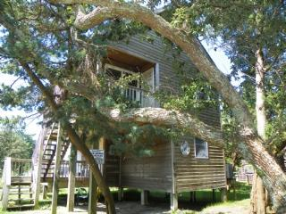 Grant III- Pet friendly cottage nestled among cedar trees - Ocracoke vacation rentals