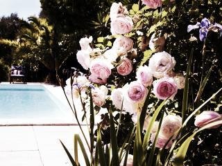 Mini Villa Jumelées - Olmeto vacation rentals