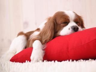 Creche e Hotel para cães em Brusque - Brusque vacation rentals