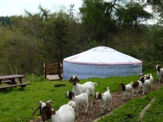 Snuggledown - Our authentic luxury Mongolian yurt - Beaworthy vacation rentals