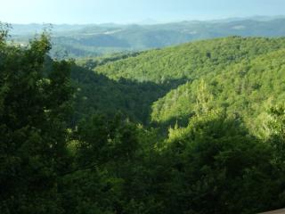 CATS PAUSE- 2 Kings 1Queen- Huge Views Easy Access - Boone vacation rentals