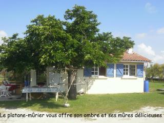 gîte au pied du phare de Richard - Jau-Dignac-et-Loirac vacation rentals